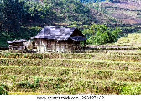 Landscape village of Agriculture Terraced Rice Field and hut on the hill Sa Pa. Lao Cai Province. Vietnam