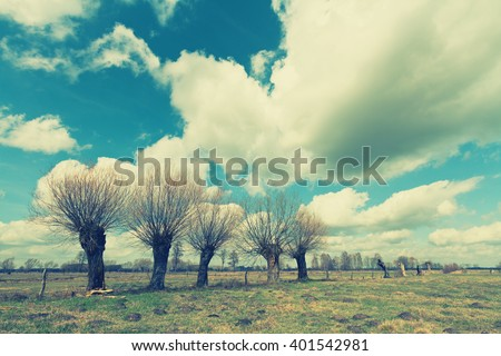 Landscape - willow trees on the meadow. Image with old, analog camera filter. Spring time. Narew river valley, Poland. - stock photo