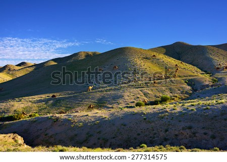 Landscape with a camels between green hills in spring Negev desert at sunset, Israel - stock photo
