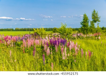 Landscape with a field of colorful flowers at sunset. - stock photo