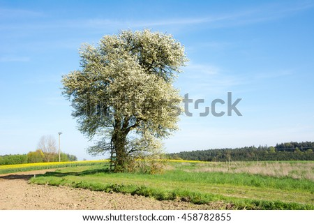 Landscape with a flowering tree at spring - stock photo