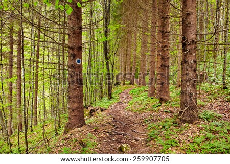 Landscape with a footpath through a pine forest - stock photo