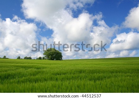 landscape with a green cornfield and white clouds - stock photo