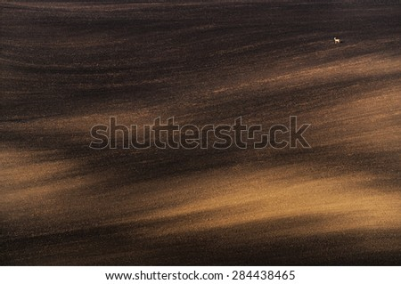 Landscape with a lonely doe. Plowed field, lit by the morning sun and a lone deer standing on it. Moravian rolling landscape on sunset in brown  colors. Moravia, Czech Republic. - stock photo