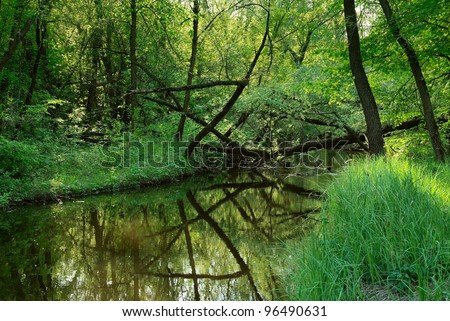 landscape with a small river in wild forest