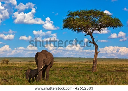 Landscape with african elephants - stock photo