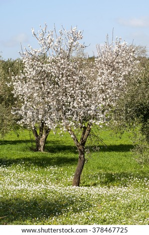 landscape with almond tree, Sicily, Italy, Europe - stock photo