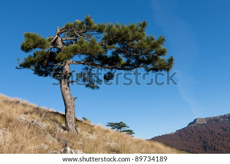 landscape with alone pine tree in mountains