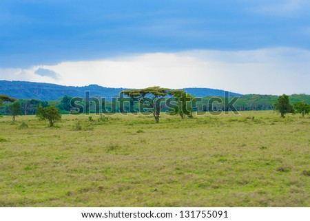 Landscape with alone tree in savannah on the Masai Mara National Reserve - Kenya - stock photo
