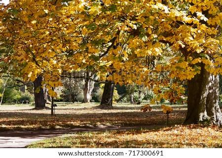 Chestnut Tree Stock Images RoyaltyFree Images Vectors