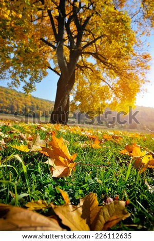 Landscape with autumn leaves on the grass