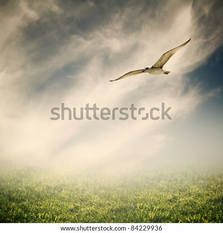 landscape with bird - stock photo