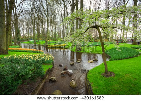 Landscape with blooming tree, beautiful flowers and water stream in famous Keukenhof park in Netherlands. Spring garden. Nature background