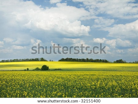 Landscape with blue sky and yellow blossom rapeseed