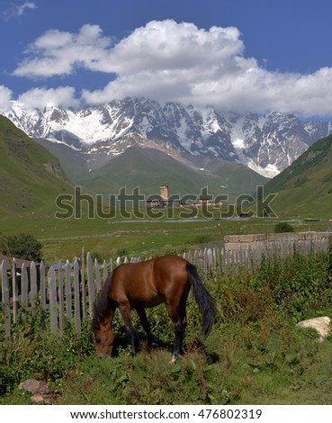 landscape with Caucasus Shkhara mountain and horse