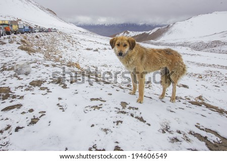 Landscape with climbers in the distance and a dog in the foreground against snow-covered mountains. - stock photo