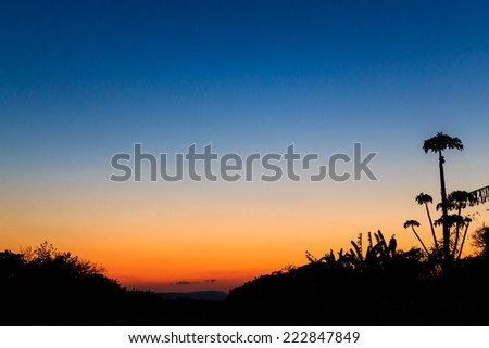 Landscape with colorful orange sunset with palm trees - stock photo