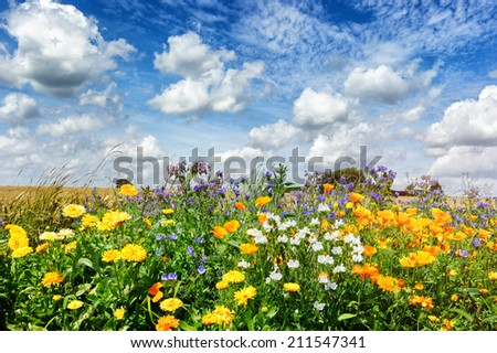 Landscape with colorful summer flowers  - stock photo
