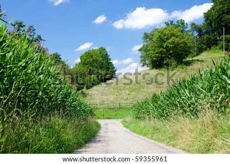 landscape  with corn fields, country road and beautiful sky