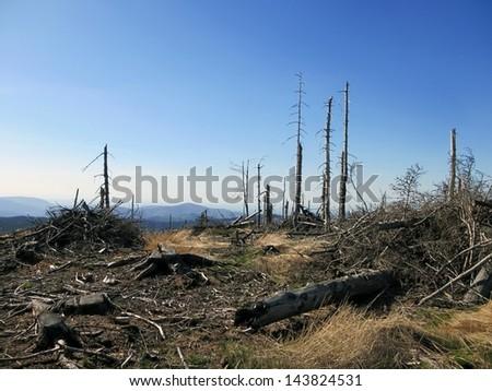 Landscape with Dead Old Trees in Poland, Beskid Slaski near the Skrzyczne peak - stock photo
