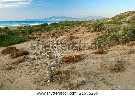 Landscape with dried tree on the sea dune