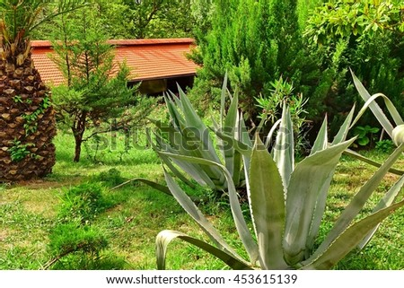 Landscape With Exotic Tropical Decorative Garden And House With Red Tiled Roof In The Background - stock photo
