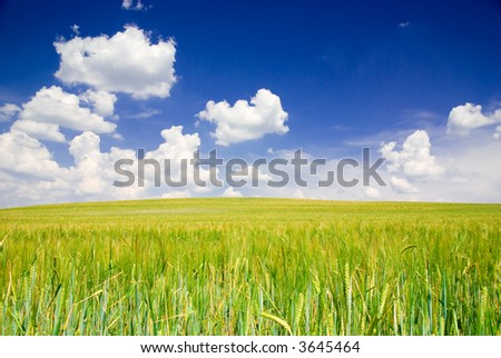 Landscape with field and blue cloudy sky (ideal for background or wallpaper)