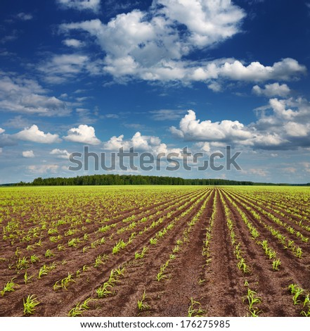 Landscape with field and blue sky  - stock photo