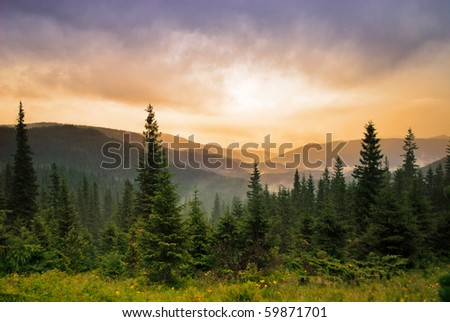 Landscape with fog in mountains and rows of trees in morning