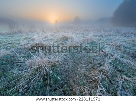 landscape with frosty plants and sunbeams - stock photo