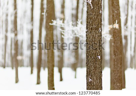Landscape with frozen forest of oak trees with selective focus - stock photo