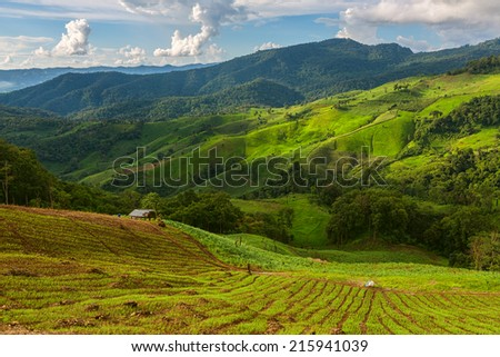 landscape with green corn field, forest, mountains - stock photo