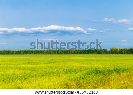 Landscape with green field at sunset. - stock photo