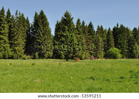 Landscape with green forest and meadow - stock photo