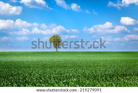 landscape with green grass field, sky and tree - stock photo
