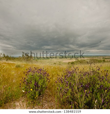 Landscape with heavy grey rain clouds above a lush growth of lavendar and grasses in Spain. - stock photo
