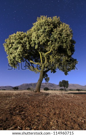 Landscape with Holm oaks in the night - stock photo