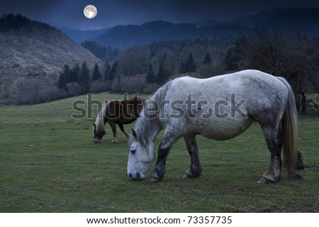 Landscape with horse - stock photo