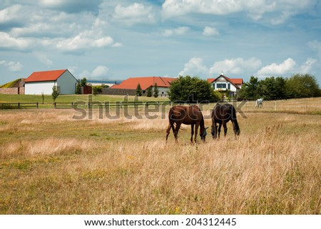 Landscape with horses on pasture - stock photo