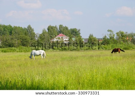 Landscape with house and horses on a Sunny summer day. Pasture in June.  - stock photo