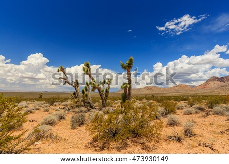Landscape with Joshua Trees at Joshua Tree Road in the Mojave Desert near Scenic Backway.