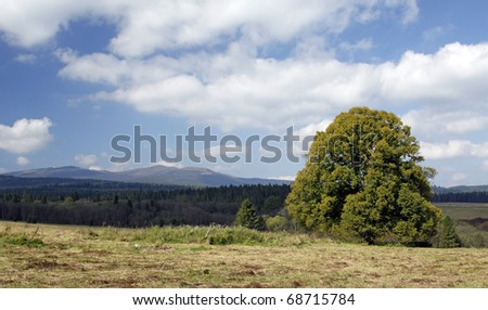 Landscape with lonely lime wood