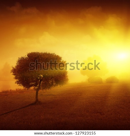 Landscape with lonely tree at sunset. - stock photo