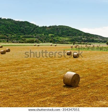 Landscape with Many Hay Bales and Vineyard in Italy - stock photo