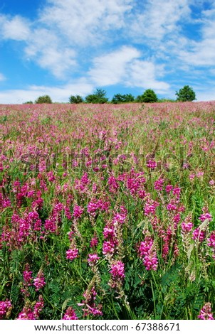 Landscape with meadow of fuxia Hedysarum coronatum