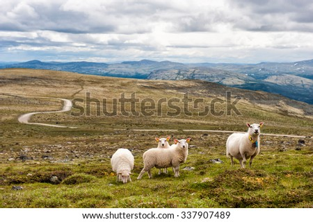 Landscape with mountains and sheep, Norway - stock photo
