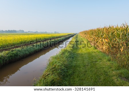 Landscape with nearly ripe forage maize plants and yellow blooming rapeseed divided by a small stream. It is still early in the morning on a sunny day at the beginning of the fall season. - stock photo