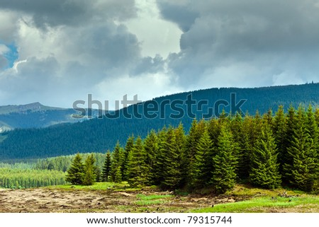 Landscape with pine forests and mountains in Romania, in summer - stock photo