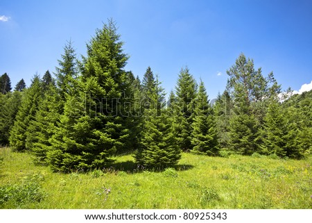 Landscape with pine forests in the  mountains  in summer - stock photo