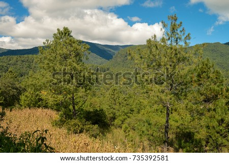 Landscape with pine trees forest in Capulalpam de Mendez in the highlands of the state of Oaxaca, Mexico. It is one of the Pueblos Magicos towns.